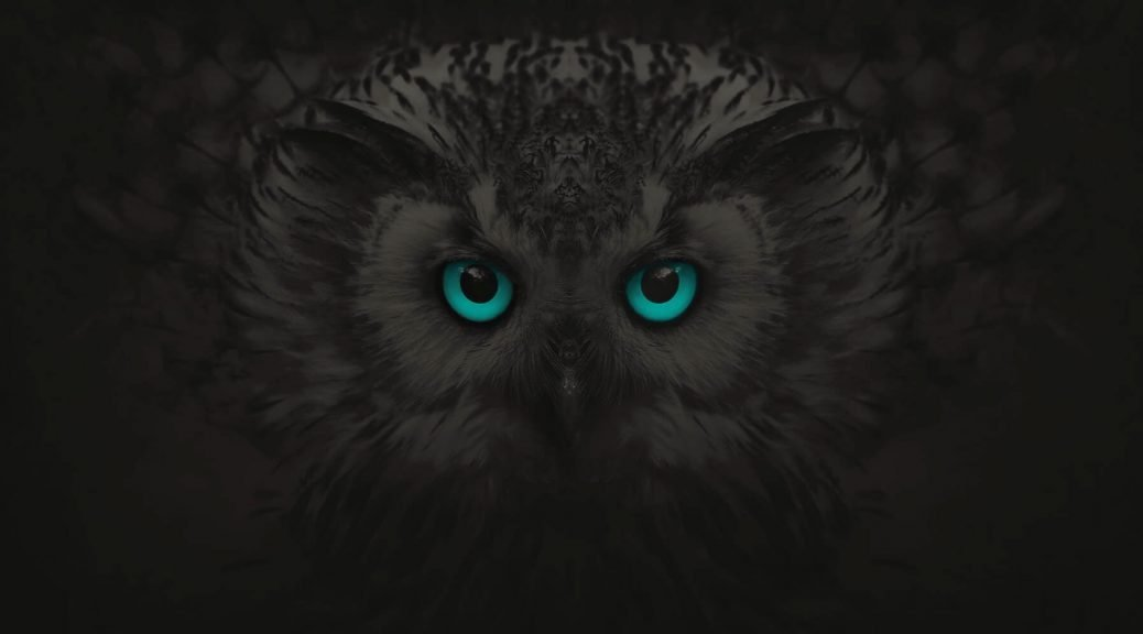 Owl Banner For Award Winning Digital Agency